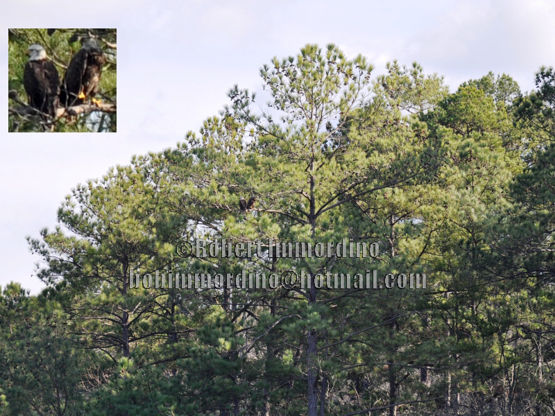 sesquicentennial state park - photo #33