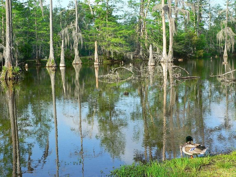 Sam Houston Jones State Park A Louisiana Park Located