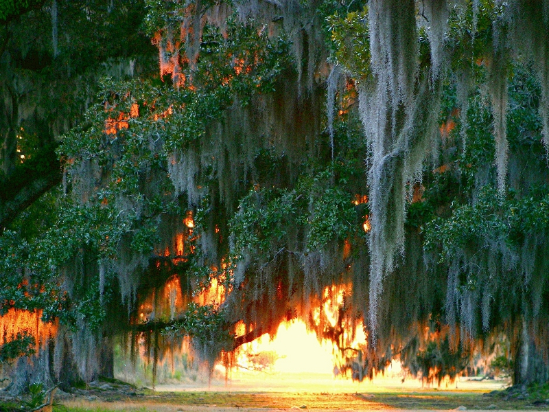List Of Parks Located In Louisiana