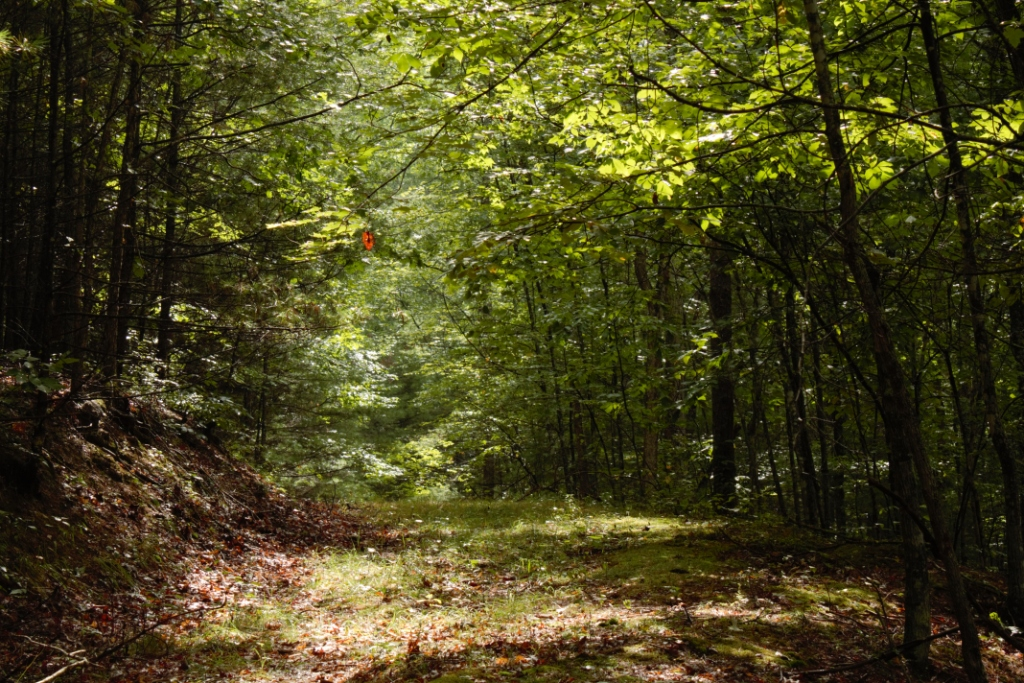 Greenbrier State Forest A West Virginia Forest Located
