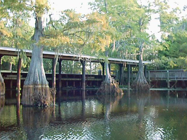 Chicot State Park A Louisiana Park Located Near Ville Platte