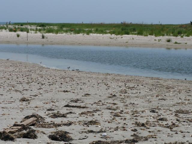 Demarest Lloyd State Beach