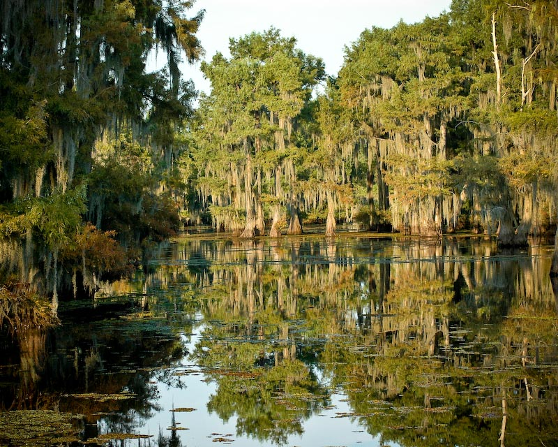 Lake Bistineau State Park A Louisiana State Park Located