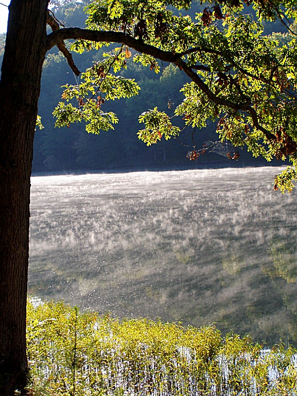 Tygarts State Forest A Kentucky State Forest Located Near