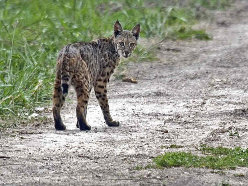 wildlife preserve texas