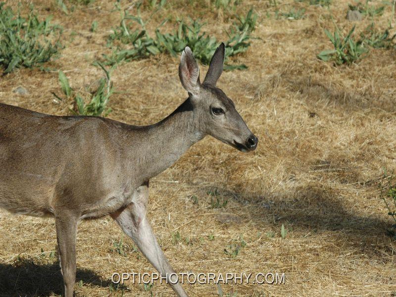 Fremont Weir State Wildlife Area A California Wildlife