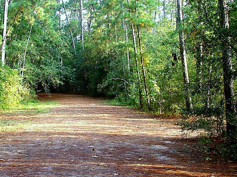 Huntsville State Park U0027Trail At Huntsvilleu0027 © Copyright 2009 Jose Garcia