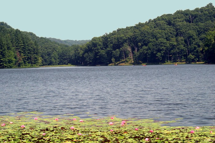 Photograph of Lake Hope Lilies