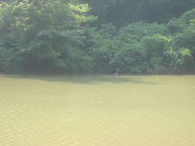Dow Lake at Strouds Run State Park - Just a stone