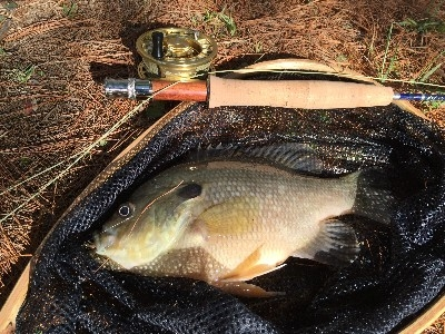 Goliath Blue Gill - Trying out new fly fishing gear at the pond