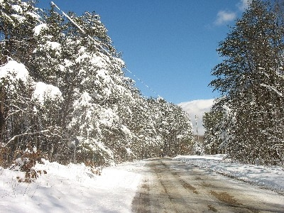 East view of Brown Road - Winter in the pines.