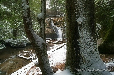 Snowy Trees, Cedar Falls - More of that snow that I like.