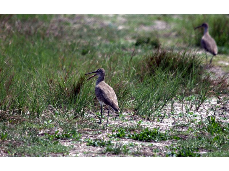 Texas Point National Wildlife Refuge, a Texas National