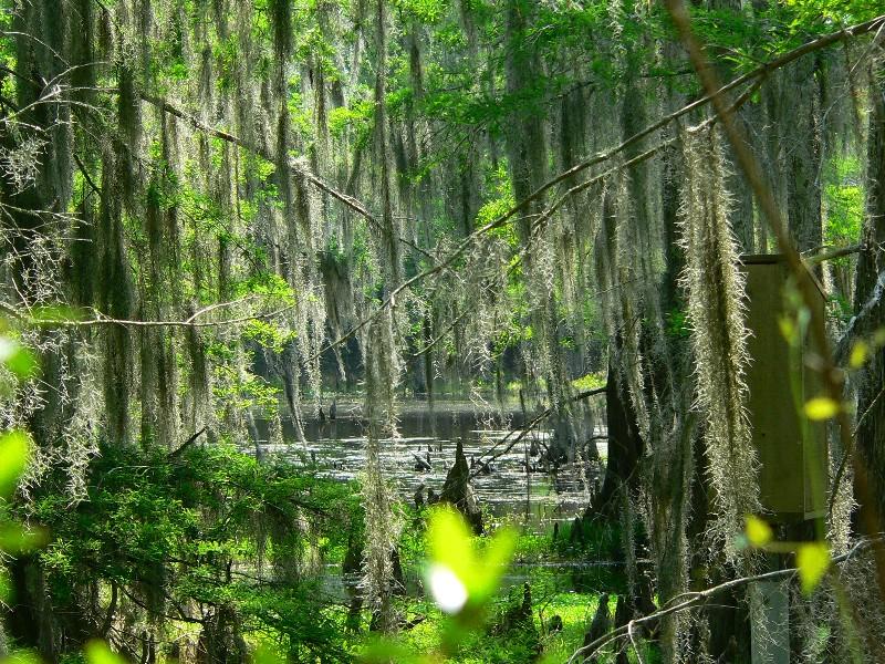 Sam Houston Jones State Park, a Louisiana State Park ...