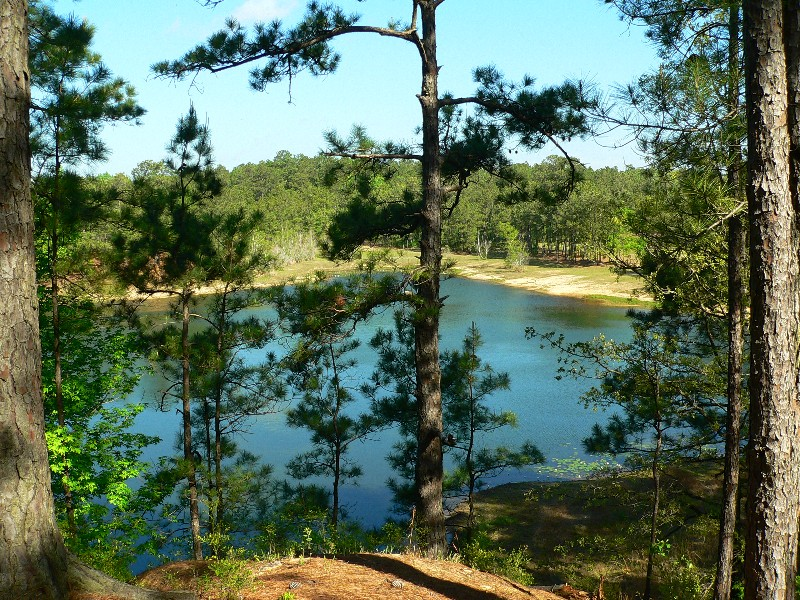 Kisatchie National Forest, a Louisiana National Forest on