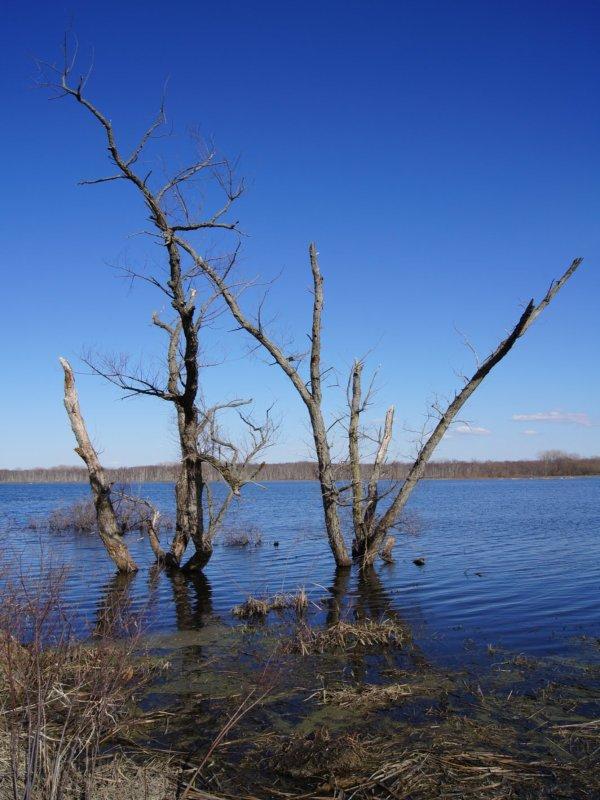 Killbuck Marsh State Wildlife Area An Ohio State Wildlife