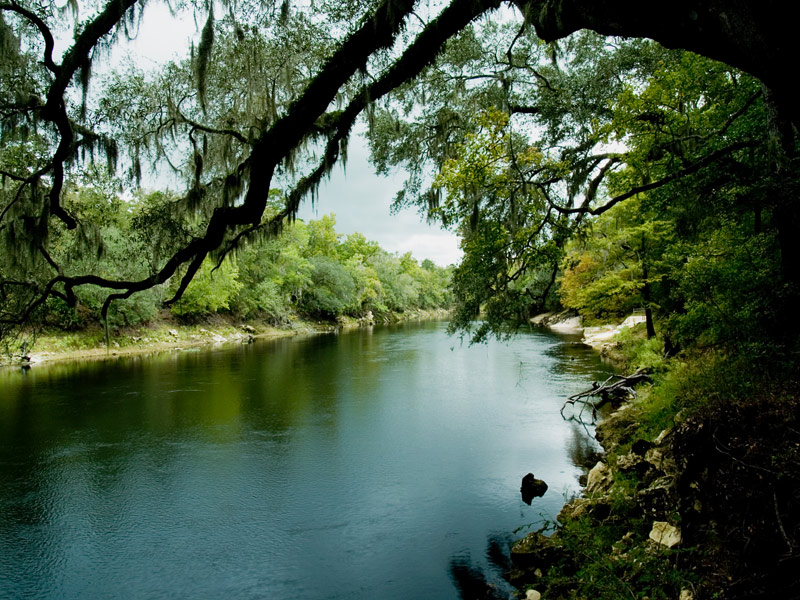 Suwannee River State Park © 2007 Lee Reed