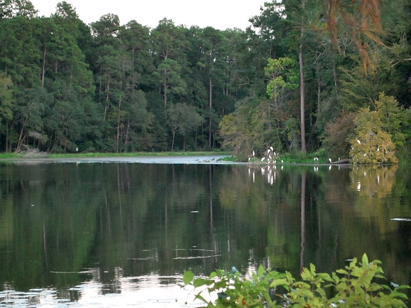 Huntsville State Park, a Texas State Park located near ...