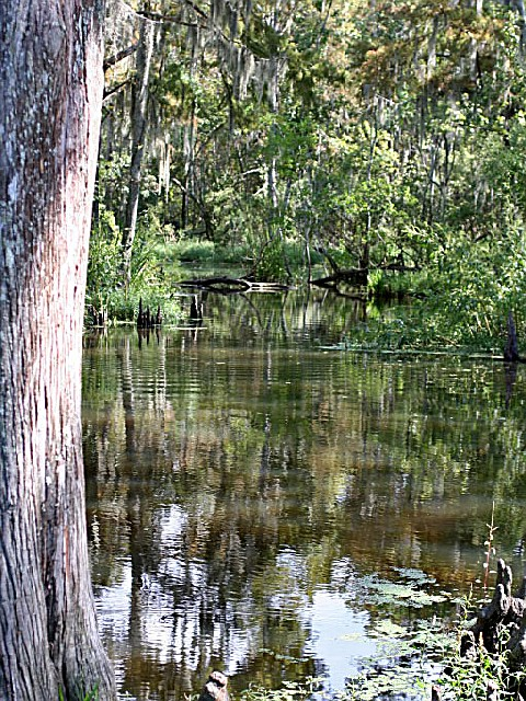 Fairview Riverside State Park A Louisiana State Park