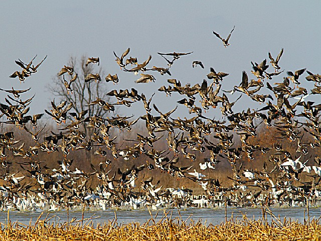 Reelfoot National Wildlife Refuge, a Tennessee National Wildlife