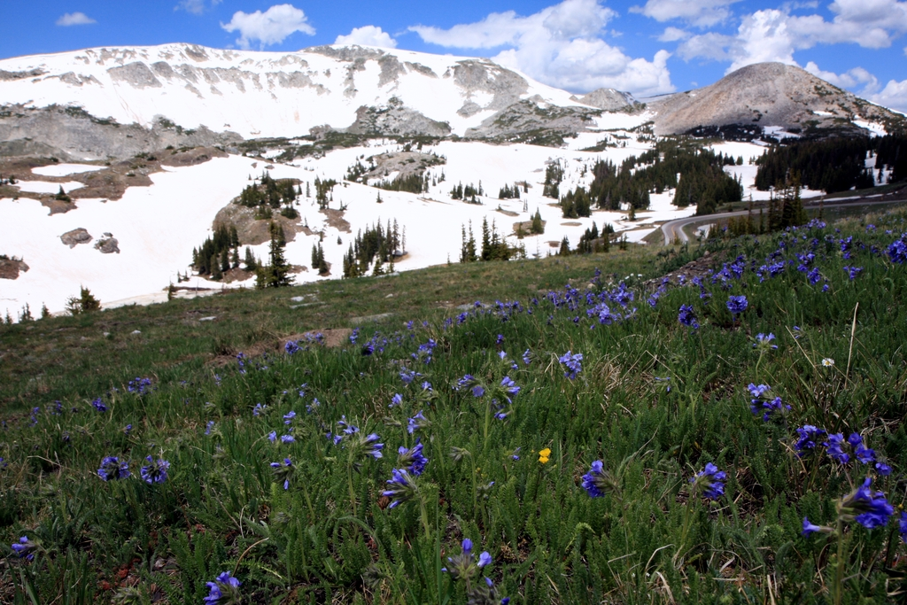 Medicine Bow National Forest, a Wyoming National Forest