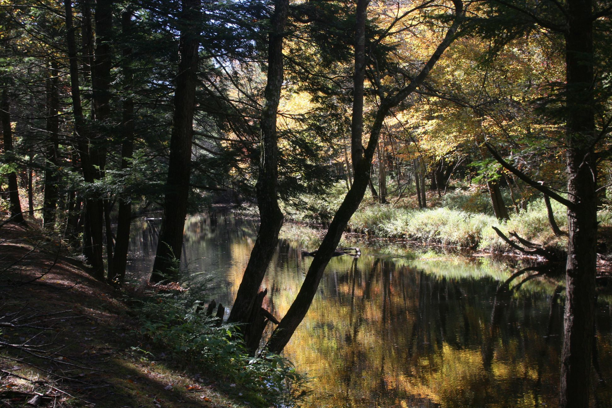 Otter River State Forest, a Massachusetts State Forest ...