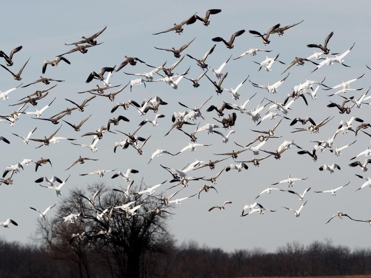 Jim Edgar Panther Creek State Fish Wildlife Area, an Illinois