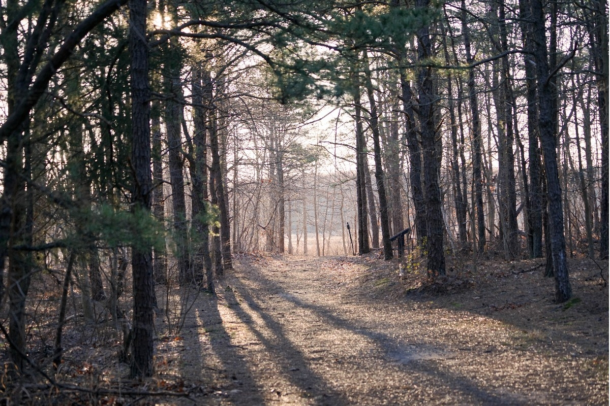 Cheesequake State Park, a New Jersey State Park located near