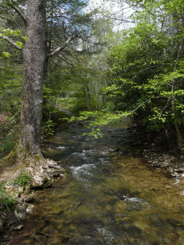 Camp Creek Wv >> Camp Creek State Forest A West Virginia State Forest Located Near