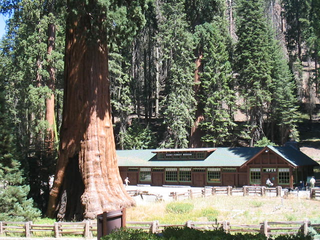 national sequoia ranger cabins park redwood wikipedia station wiki meadow
