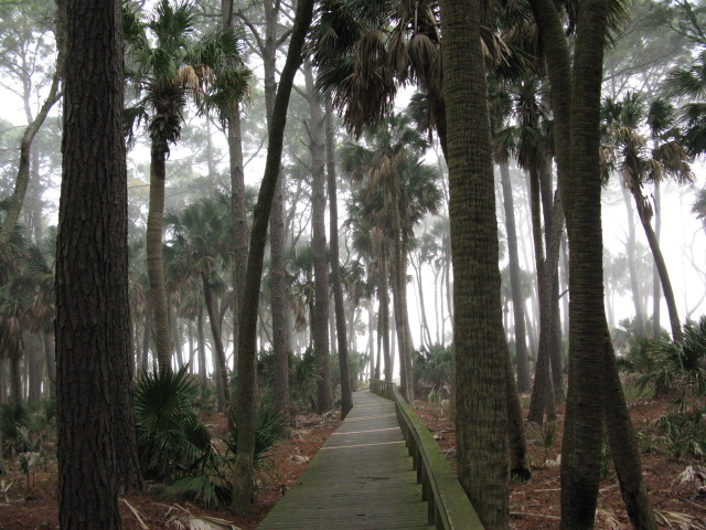 Image Result For Hunting Island State Park Sc Reservations