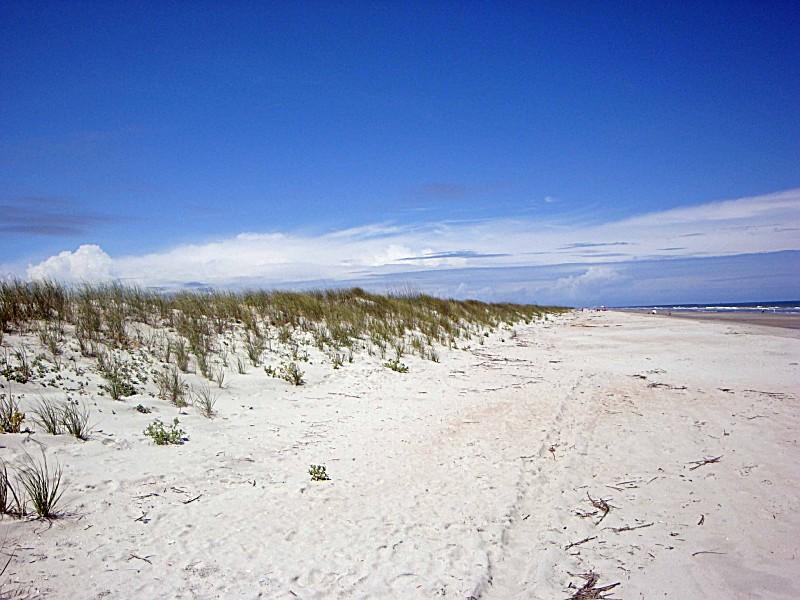 huntington beach state park a south carolina state park located