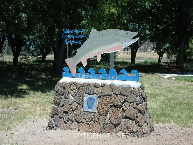 Crystal lake state fish hatchery a california hatchery for California fish hatcheries