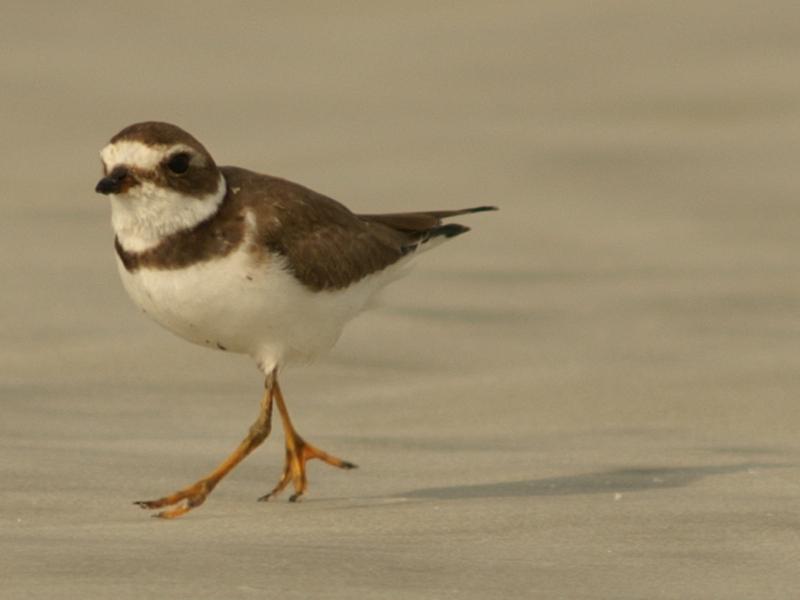 Beach Birds Jacksonville Florida