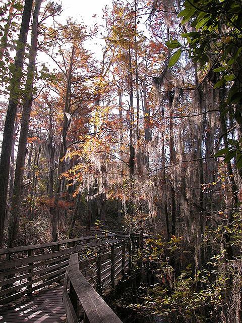 First Landing State Park A Virginia Located Near Chesapeake Hampton And Norfolk