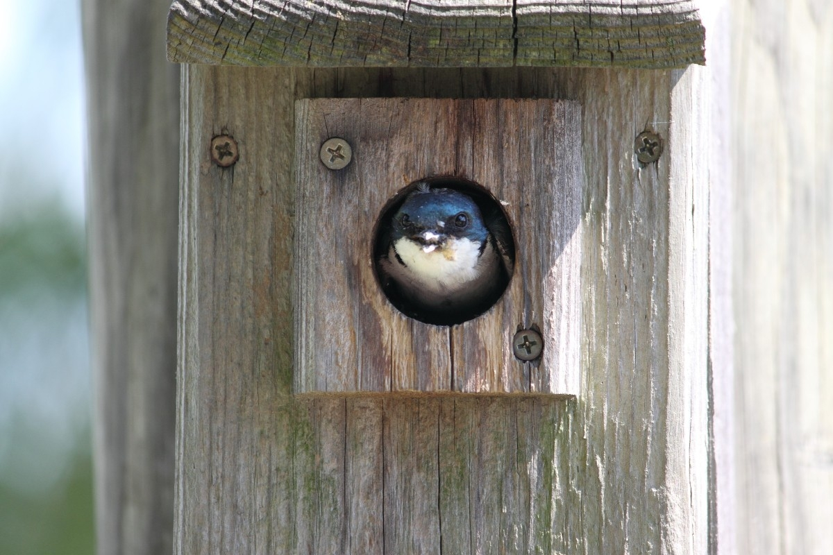 Bird Houses at Glaciers Edge Lodge - We have bird houses all over the property