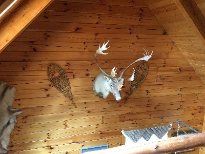 The Blue Jay Cabin - Our exquisitely decorated cabins are loaded with amenities, including one-of-a-kind trophy mounts.