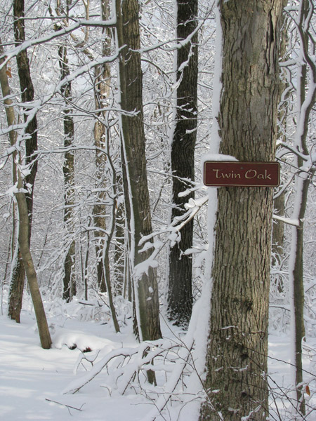Twin Oak winter wonderland