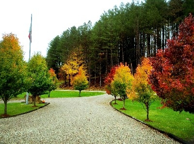 View from Driveway - The Fall at Tara Is amazing. It explodes with Color