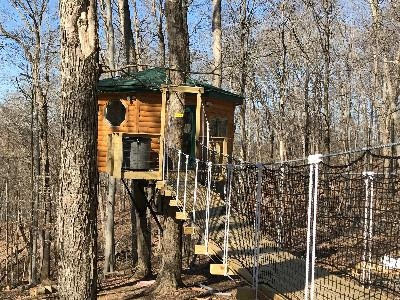 Safari Tree House - Entry with cable bridge