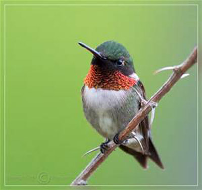 Hummingbirds Galore! - We have as many as 500 hummingbirds At Boulders Edge from April though Spetember